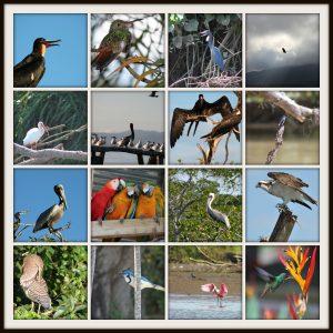 CostaRicavogels