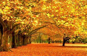herfst hunkeringen