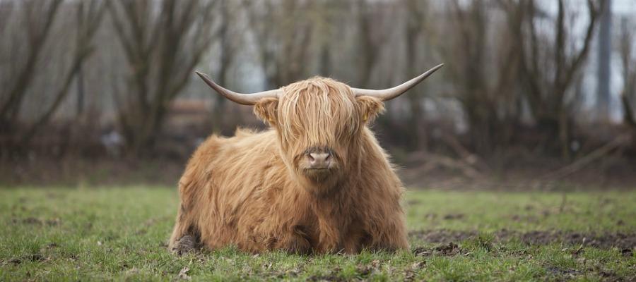 biologisch rundvlees online