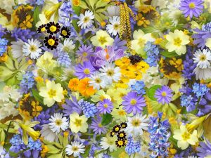 bloembollen