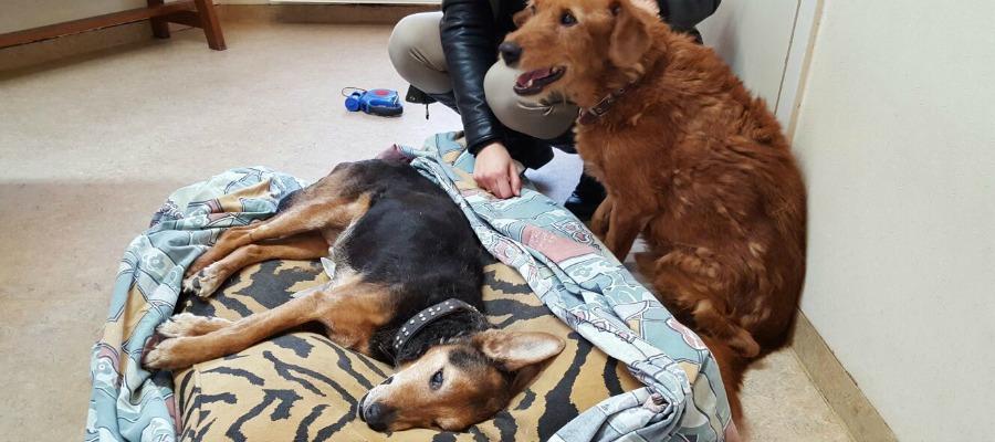 kinderen en de dood van een hond