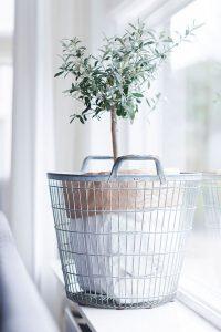 donkere woonkamer opfrissen met kamerplanten