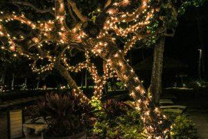 Coole effecten met tuinverlichting - header