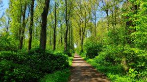 Balijbos - bossen in Zoetermeer