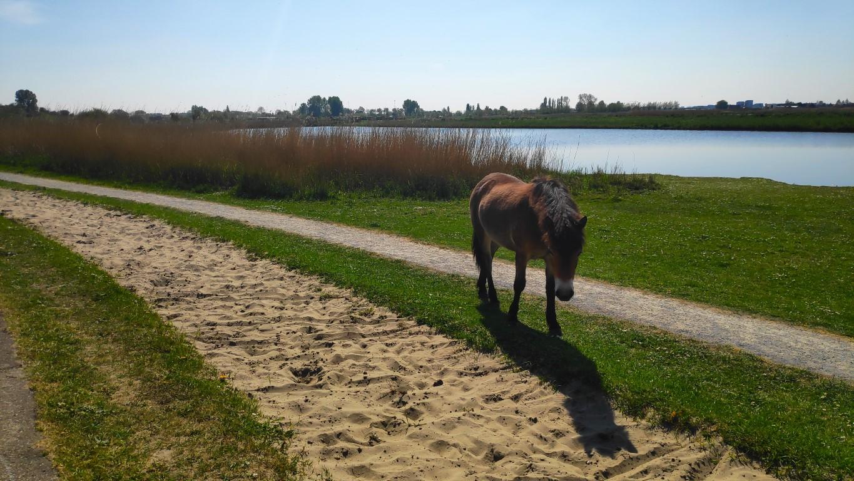 Buytenpark Zoetermeer dieren